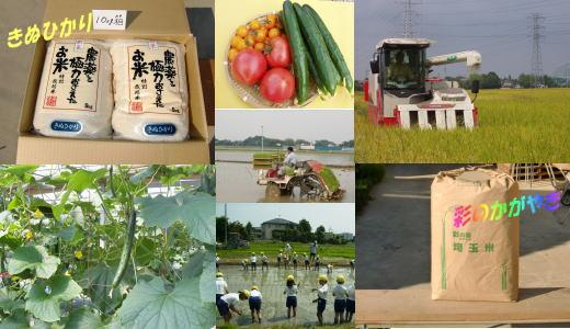 特別栽培 トマト・コメ、きゅうり   「野本ファーム」